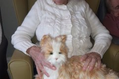 Cat donation residential care home Hyde