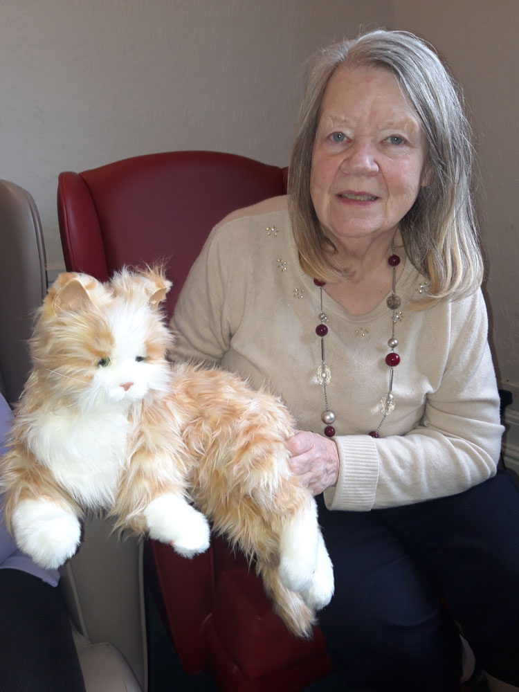 Cat in residential care home Hyde
